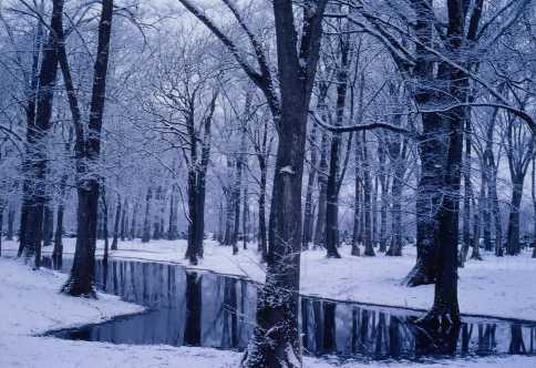 冬のしのつ河畔林